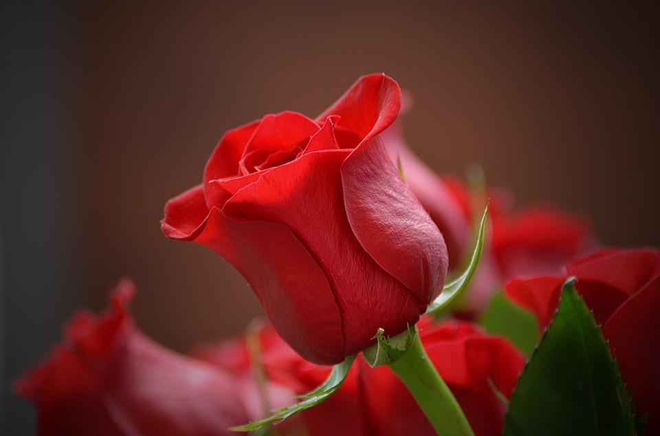 Offrir un bouquet de fleur à Noël