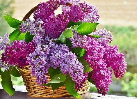 conserver lila