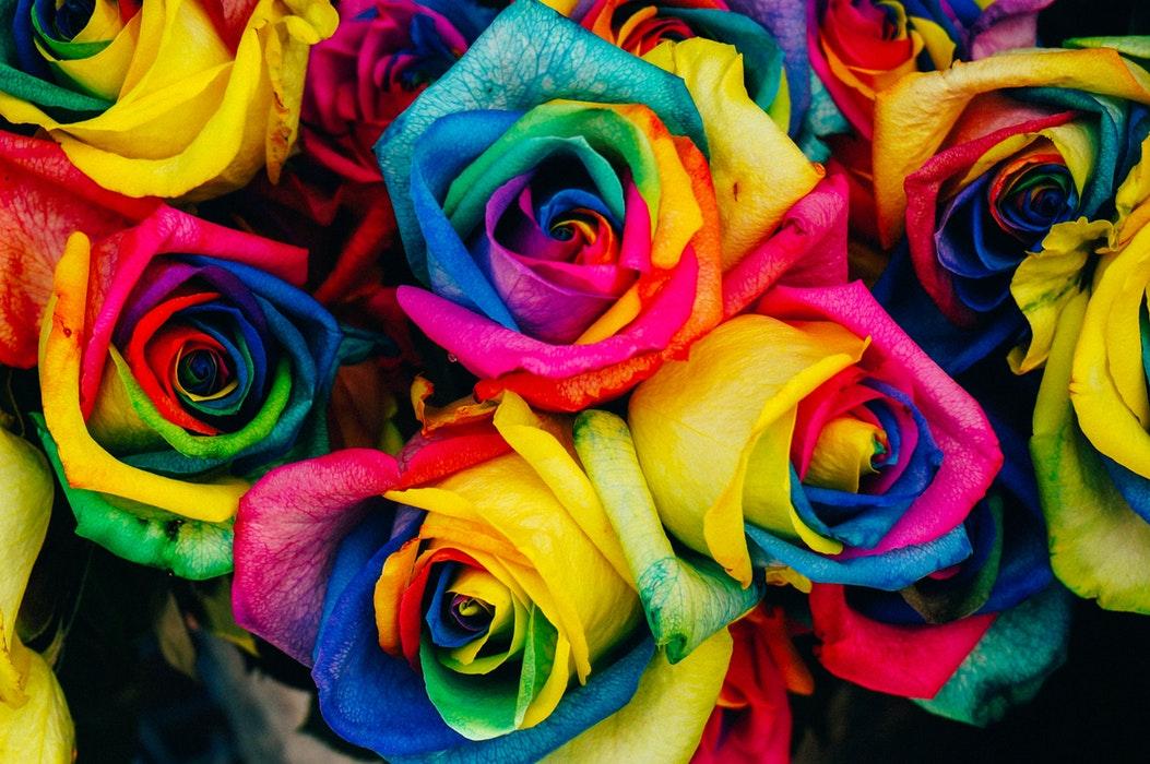 rose juin
